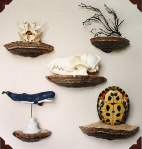 Mushroom Shelves by Paul Baxendale click on image to reach very the very precise Mushroom Shelf Tutorial on FinderMake.r
